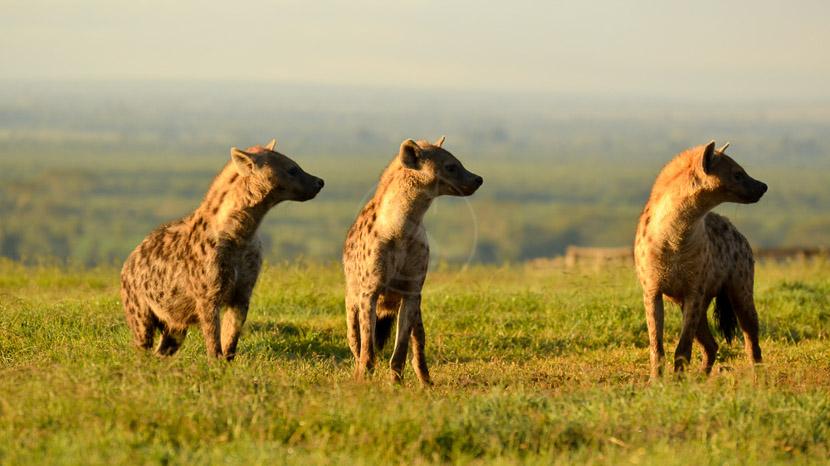 Ol Pejeta, Ol Pejeta, Kenya