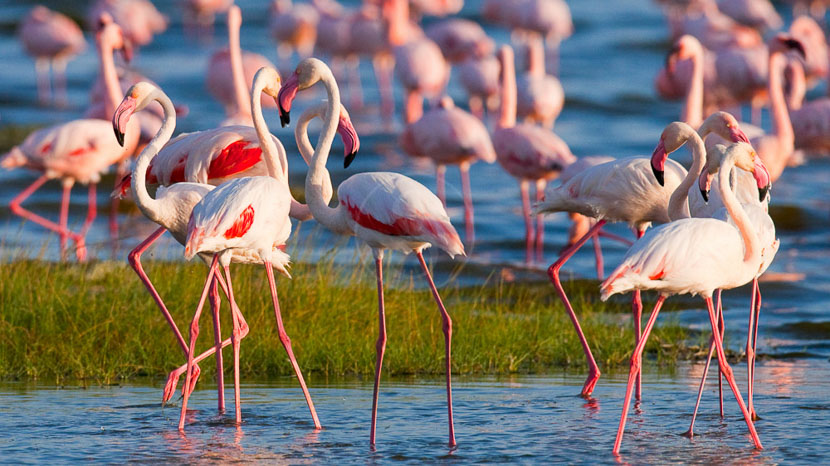 Région des lacs, Ambiance du Lac Nakuru, Kenya