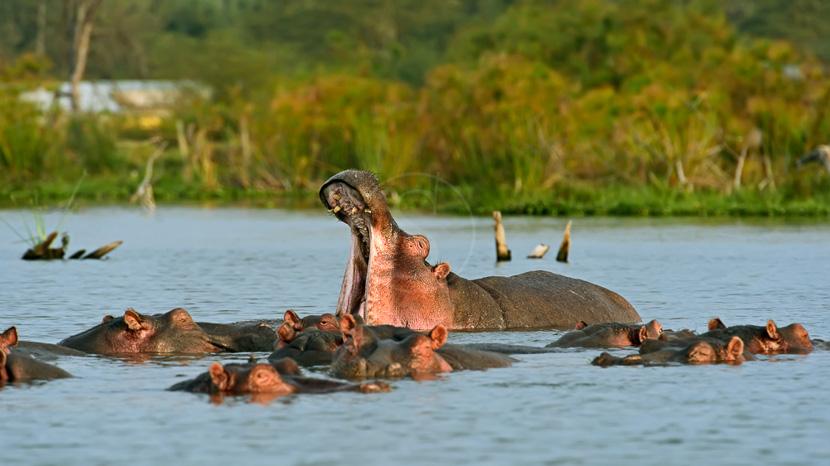 Région des lacs, Ambiance du Lac Naivasha, Kenya