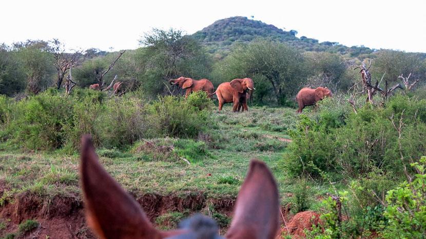 Safari à cheval à Sosian, Safari cheval Sosian, Kenya