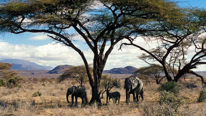 Safari en 4x4 dans la réserve de Samburu, Safari à Samburu, Kenya © &Beyond / Ron Magill