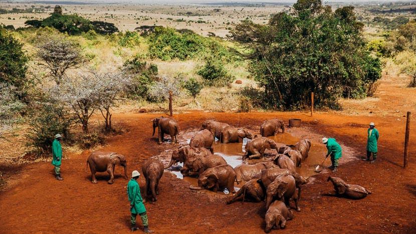 Visite du Sheldrick Wildlife Trust, Sheldrick Wildlife Trust, Kenya