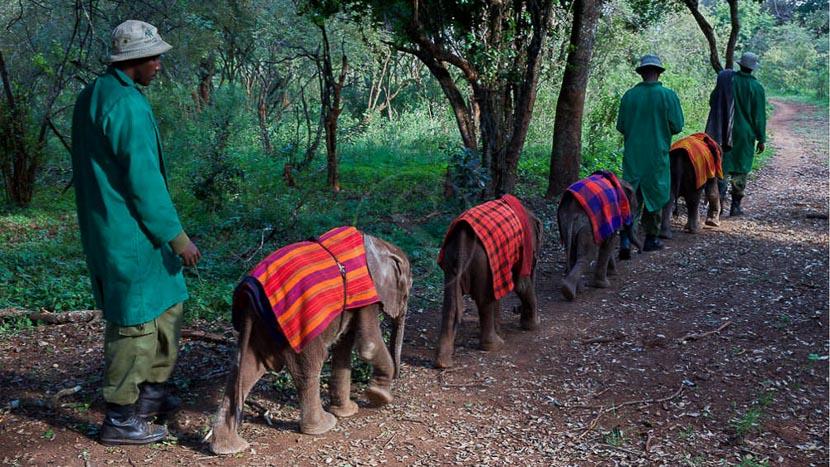 Expérience à Ithumba, Sheldrick Wildlife Trust, Kenya