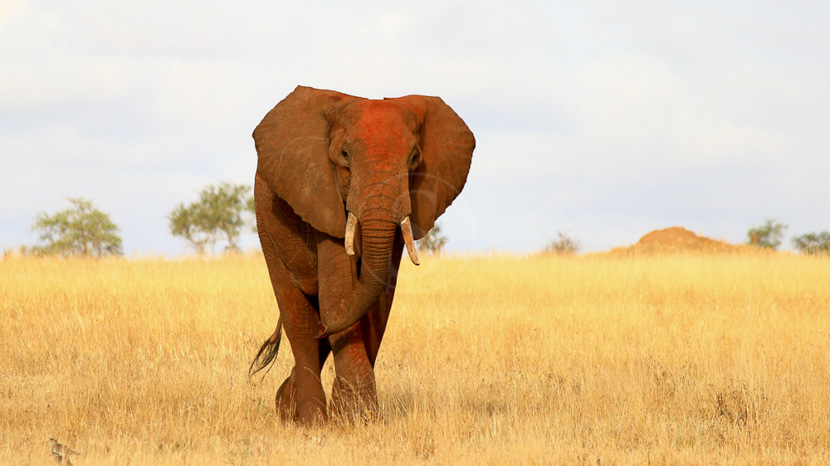 Parc national de Tsavo, Tsavo Est, Kenya