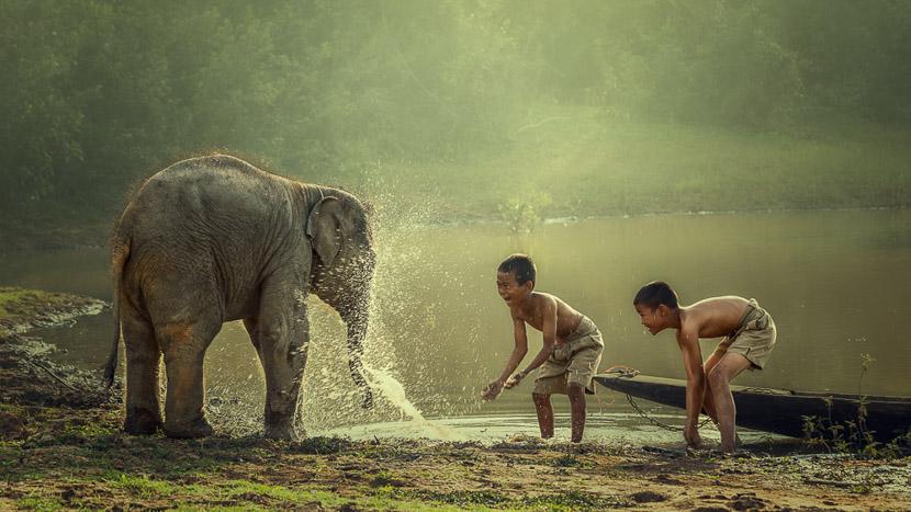 Centres de protection des éléphants, Pakbeng, Laos