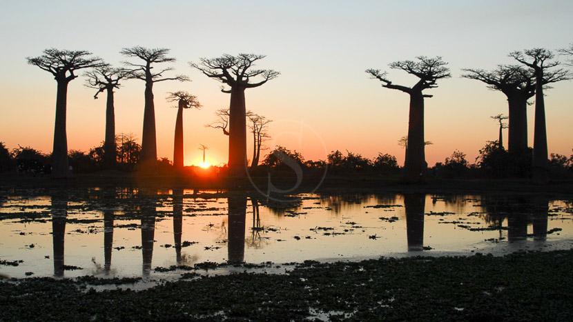 L'Allée des Baobabs, Ambiance de Madagascar