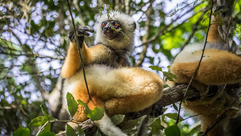 Parc national d'Andasibe, Parc de Andasibe, Madagascar
