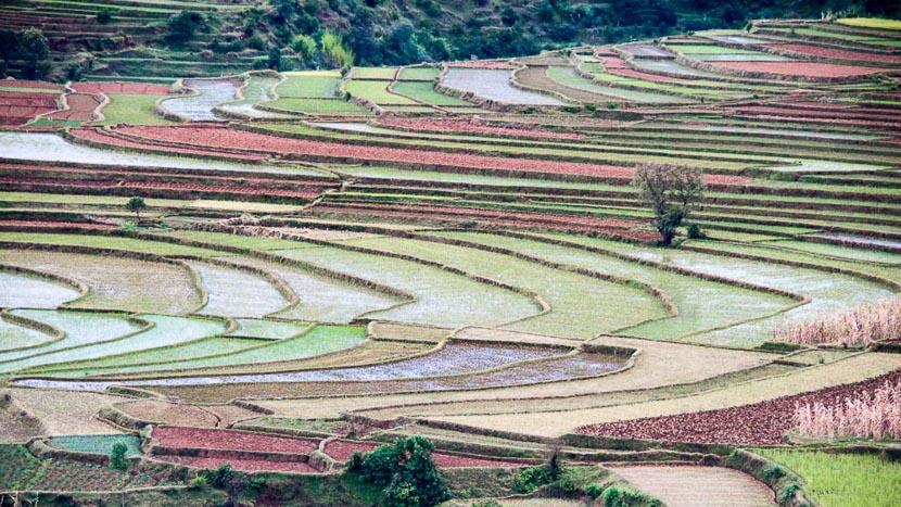 Antsirabe, Cultures en terrasse vers Antsirabe, Madagascar