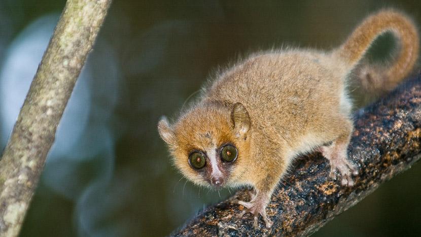 Visite d'Antsirabe, Ambiance de Madagascar