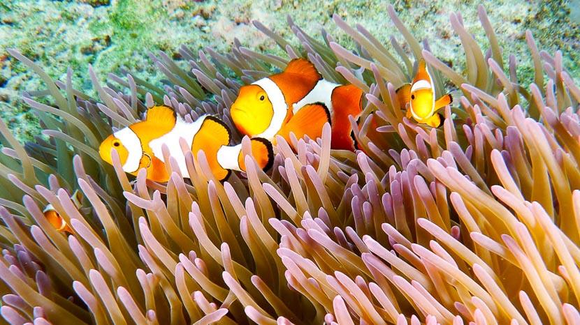 Plonger en Malaisie, Plongée à Raja Ampat © Sonia Rousseau