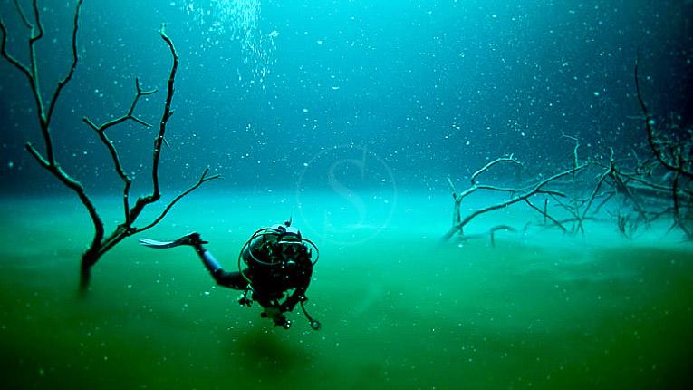 Plongées Playa del Carmen, Vie sous-marine à Playa des Carmen © Phocea Mexico