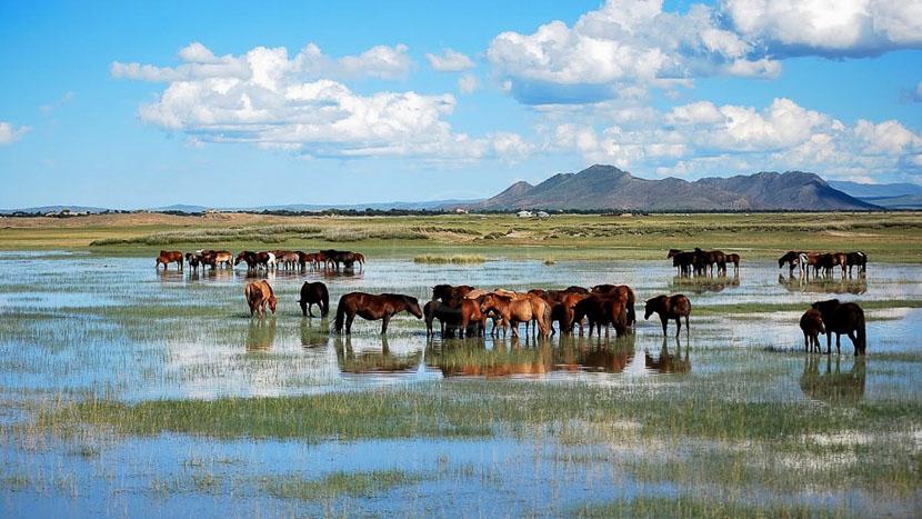 Equitation au Five Rivers Tour Camp, Sweet Gobi Lodge, Mongolie