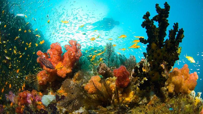 Plongée dans l'archipel de Bazaruto, Benguerra Lodge, Mozambique © &Beyond