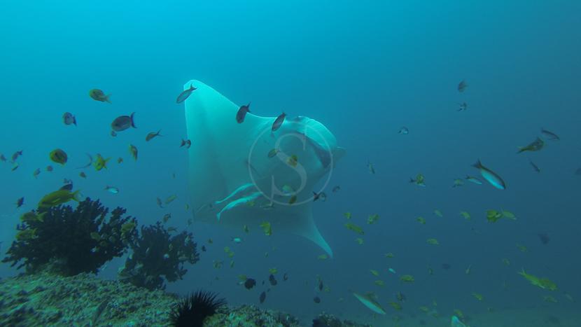 Plongée dans l'archipel de Bazaruto, Farol da Barra à Inhambane, Mozambique