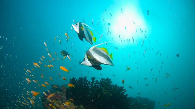 Les fonds marins du Mozambique, Benguerra Lodge, Mozambique © &Beyond