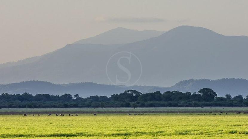 Parc national de Gorongosa, Parc de Gorongoza, Mozambique © Joachim Stretz