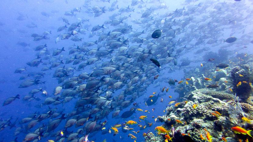 Plongée à Vamizi , Vamizi Island, Mozambique © Andbeyond