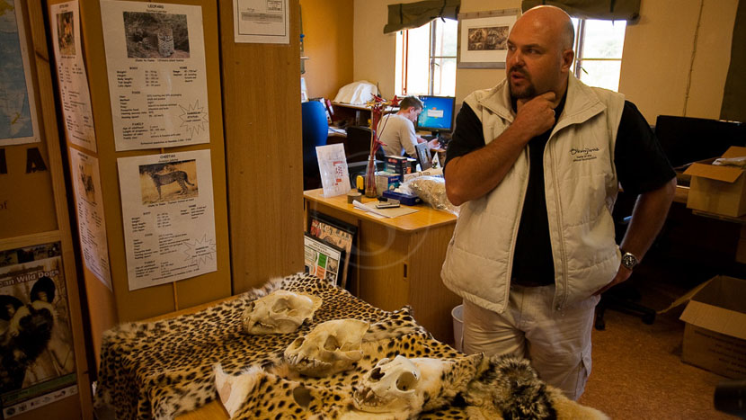 Visite de l'AfriCat Foundation, African Cat  Project à Okonjima, Namibie