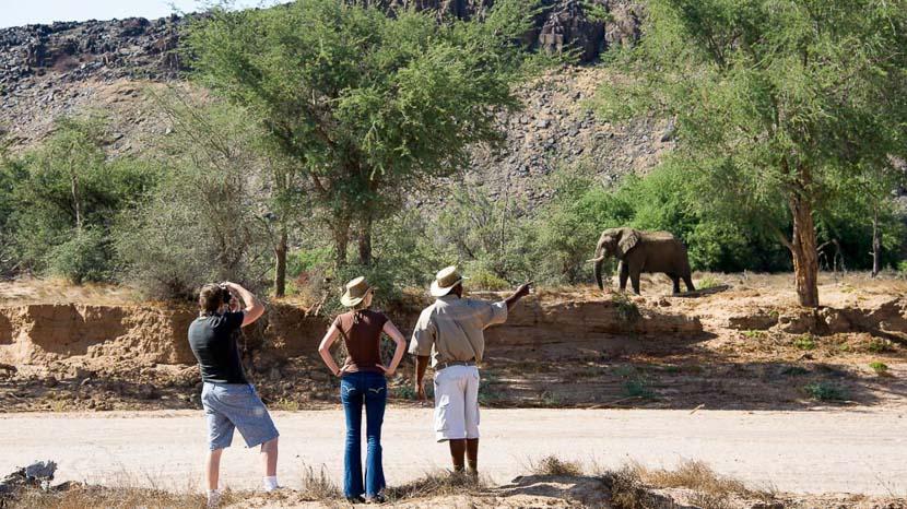 Éléphants du désert dans le Damaraland, Damaraland Camp, Namibie © Dana Allen - Wilderness