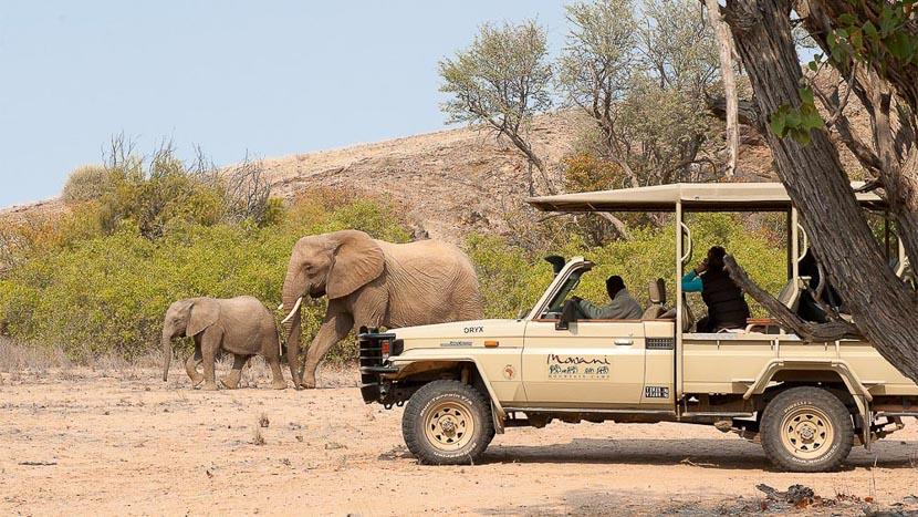 Éléphants du désert dans le Damaraland, Mowani Mountain Camp, Namibie