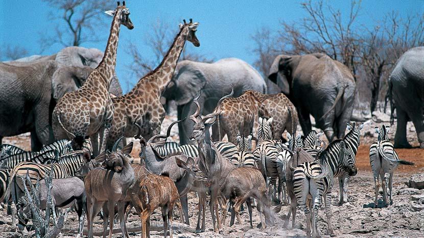 Parc national d'Etosha, Safari en Namibie © Alain Pons
