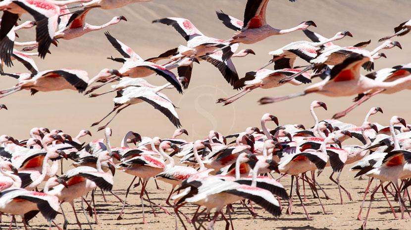 4x4 à Sandwich Harbour, Walvis Bay, Namibie