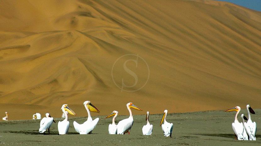 4x4 à Sandwich Harbour, Excursions à Sandwich Harbour, Namibie © SH. 4x4