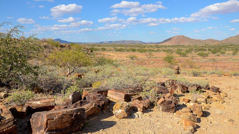 Forêt pétrifiée du Damaraland, Forêt pétrifiée, Namibie @ Olivier Cellier