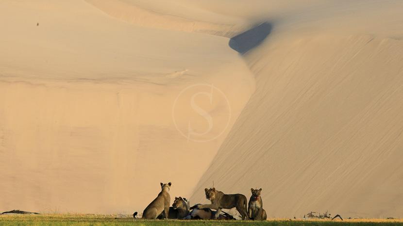 Safaris et excursions près d'Hoanib, Hoanib Camp, Namibie © Dana Allen - Wilderness