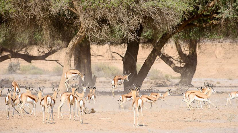 Safaris et excursions près d'Hoanib, Hoanib Camp, Namibie © Olwen Evans - Wilderness