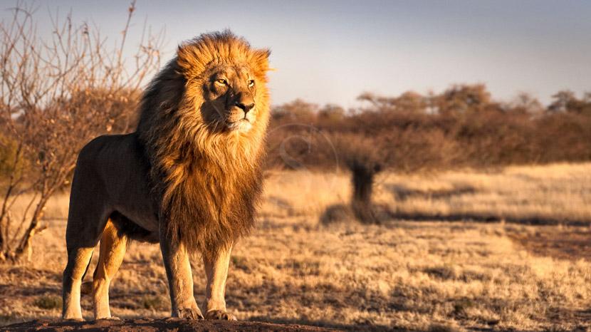 Désert du Kalahari, Kalahari, Afrique du Sud