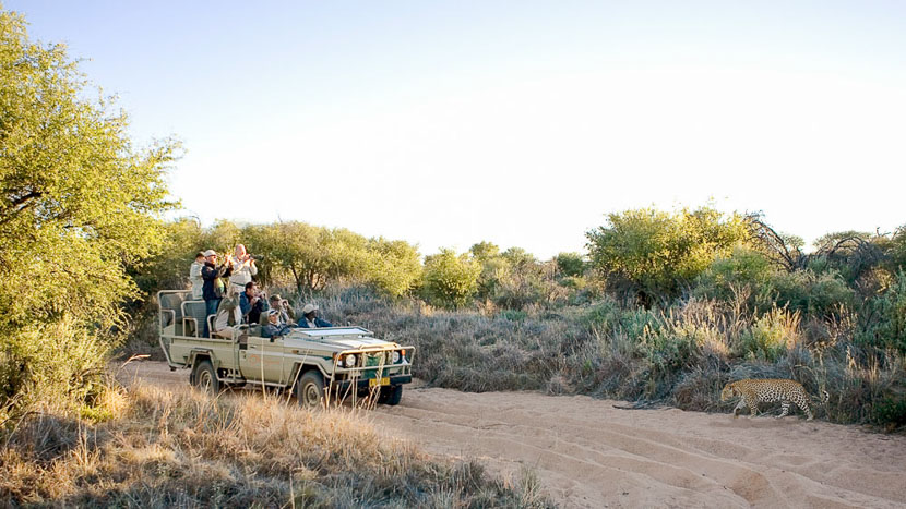 Léopards d'Okonjima, Okonjima Luxury Bush Camp, Namibie © Paul Martens