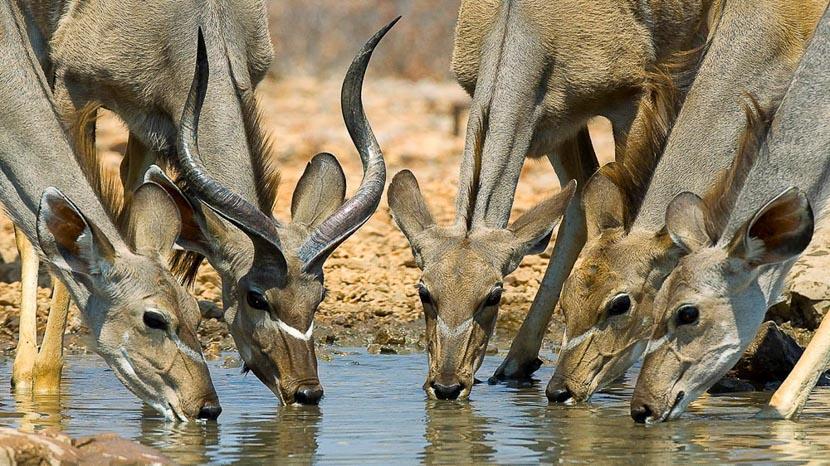 Réserve Ongava, Safaris à Ongava Game Reserve, Namibie © Dana Allen
