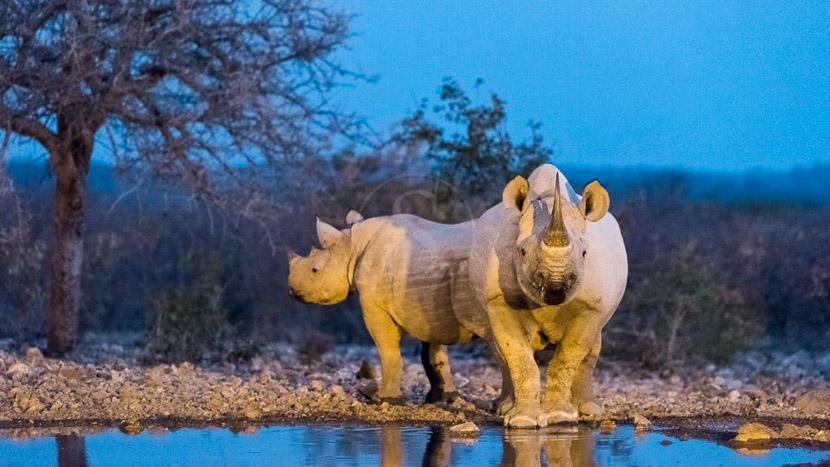 Réserve Ongava, Safaris à Ongava Game Reserve, Namibie © Olwen Evans