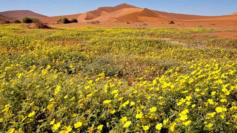 Le désert de Namib et les dunes de Sossusvlei, Dunes de Sossusvlei dans le Désert du Namib