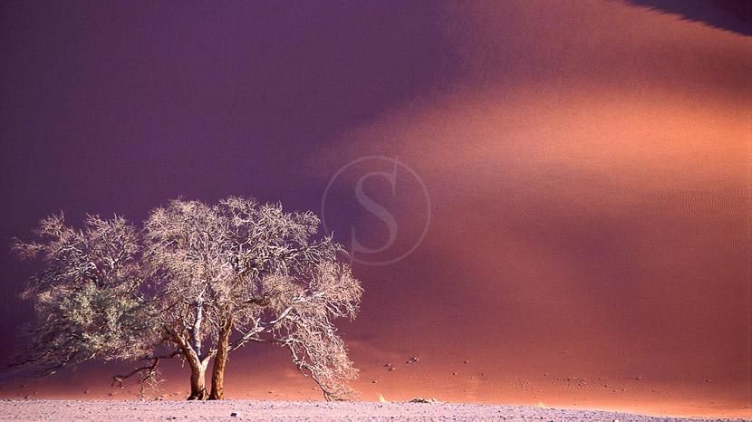 Le désert de Namib et les dunes de Sossusvlei, Safari en Namibie © Alain Pons