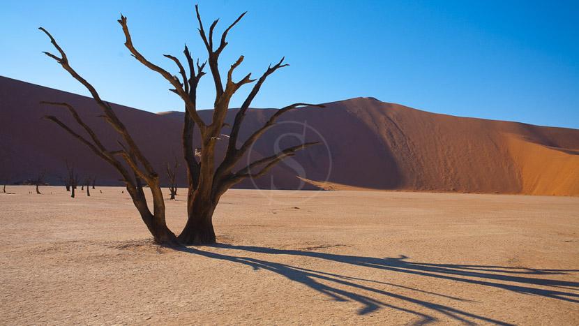 Journée d'excursion à Sossusvlei au départ de Sesriem, Dead Vlei à Sossusvlei, Namibie