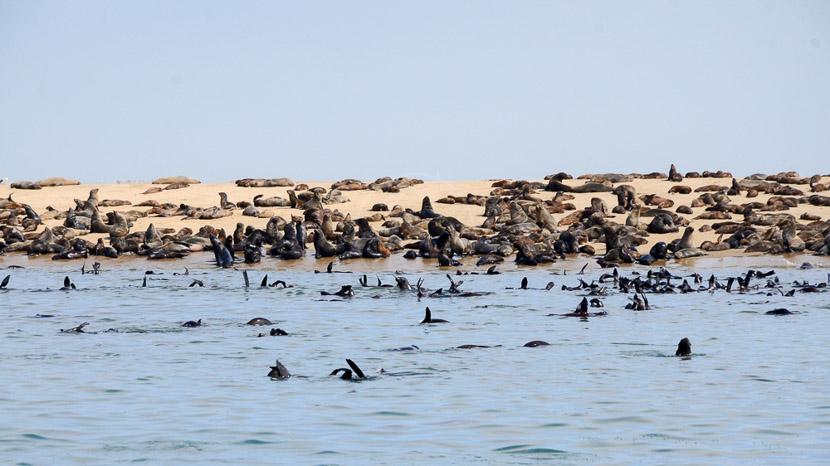 Excursion bateau à Walvis Bay, Walvis Bay, Namibie © Aurélie Carroll