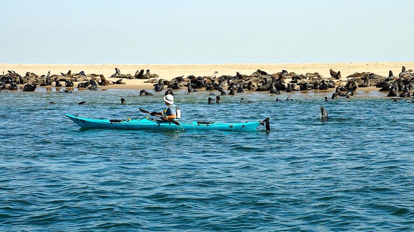 Kayak avec des otaries à Walvis Bay, Kayak à Walvis Bay, Namibie