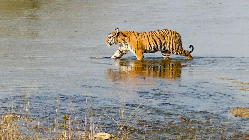 Safari dans le parc national de Bardia, Karnali Lodge, Népal © Tiger Tops