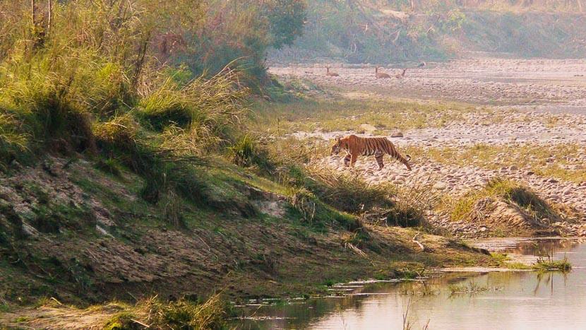 Safari dans le parc national de Bardia, Racy Shade Bardia, Népal © Racy Shade
