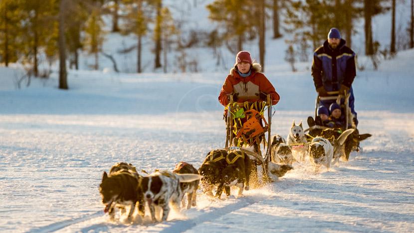 Activités d'hiver à Malangen Resort , Malangen Resort Activites Winter, Norvège
