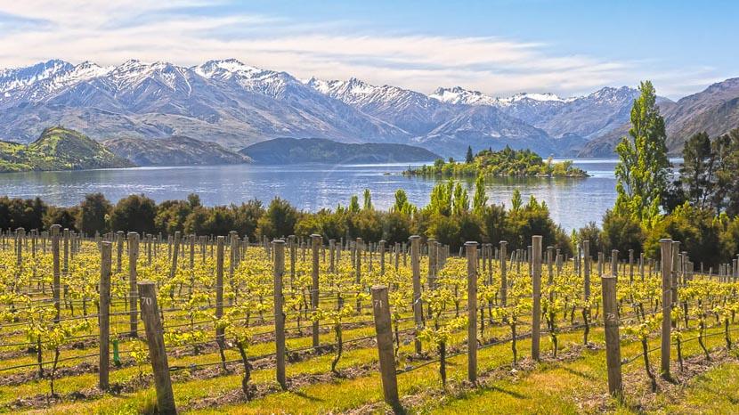 Dégustation dans un vignoble de Central Otago, Vignes en Nouvelle Zélande © Shutterstock
