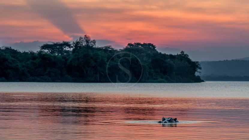Parc National du lac Mburo, Hippo Sunset ! Sur le lac Mburo, Ouganda