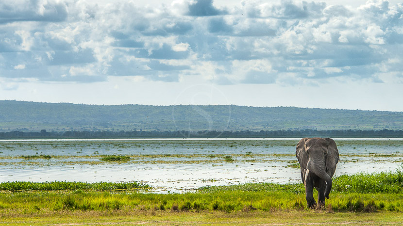 Parc National Murchison Falls, Parc national de Murchison, Ouganda © Shutterstock