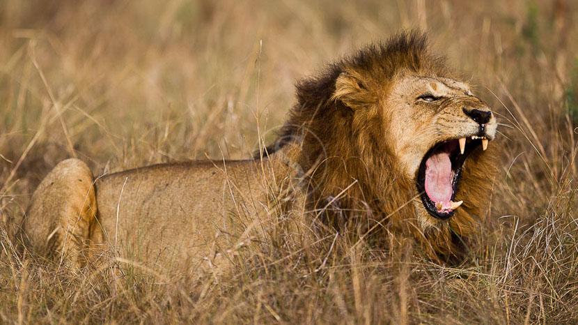 Parc national Queen Elizabeth, Safari en Ouganda © Christophe Courteau