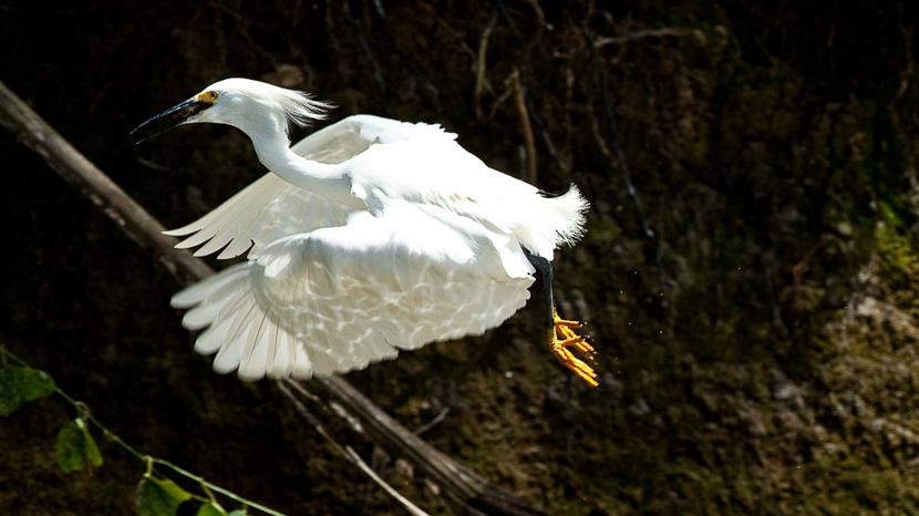 Birdwatching au Panama, Cano Negro, Costa Rica © L. Guillot / Etendues Sauvages