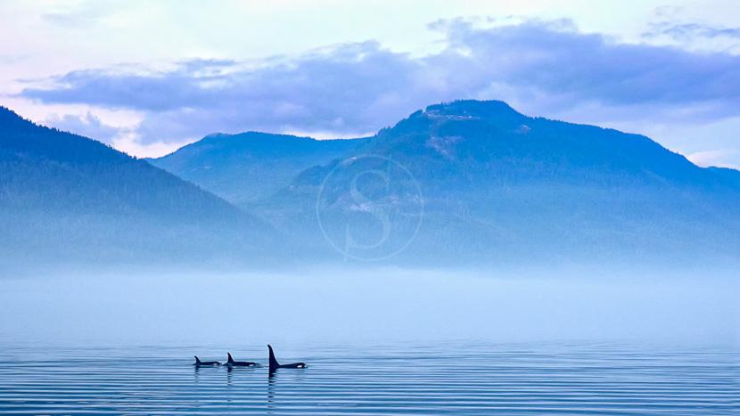 Sur les traces des chercheurs d'or, Ile de Vancouver, Canada © Shutterstock