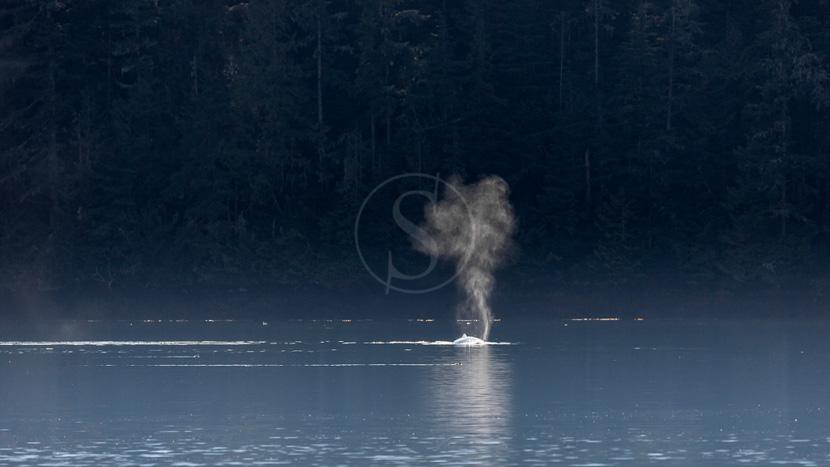 Sur les traces des chercheurs d'or, Détroit de Johnstone en Colombie Britannique, Canada © Shutterstock