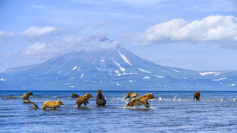 Les ours du lac Kourile, Lac Kourile Kamtchatka © Shussterstock